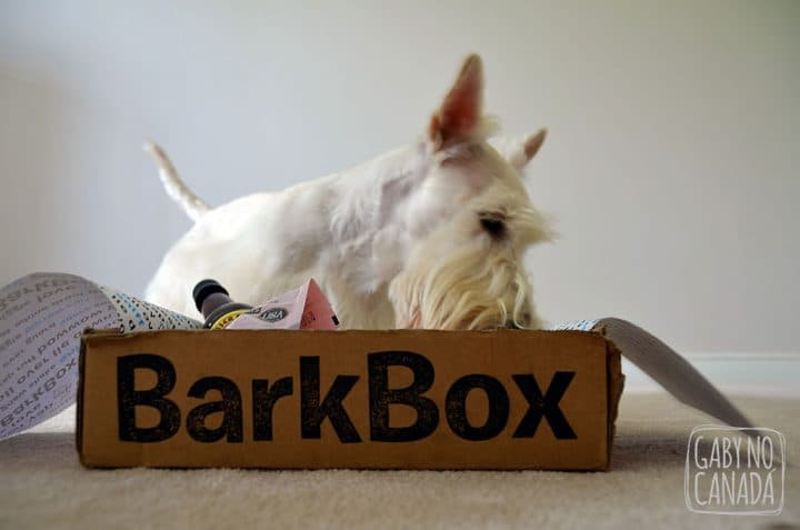 barkbox_gabynocanada2