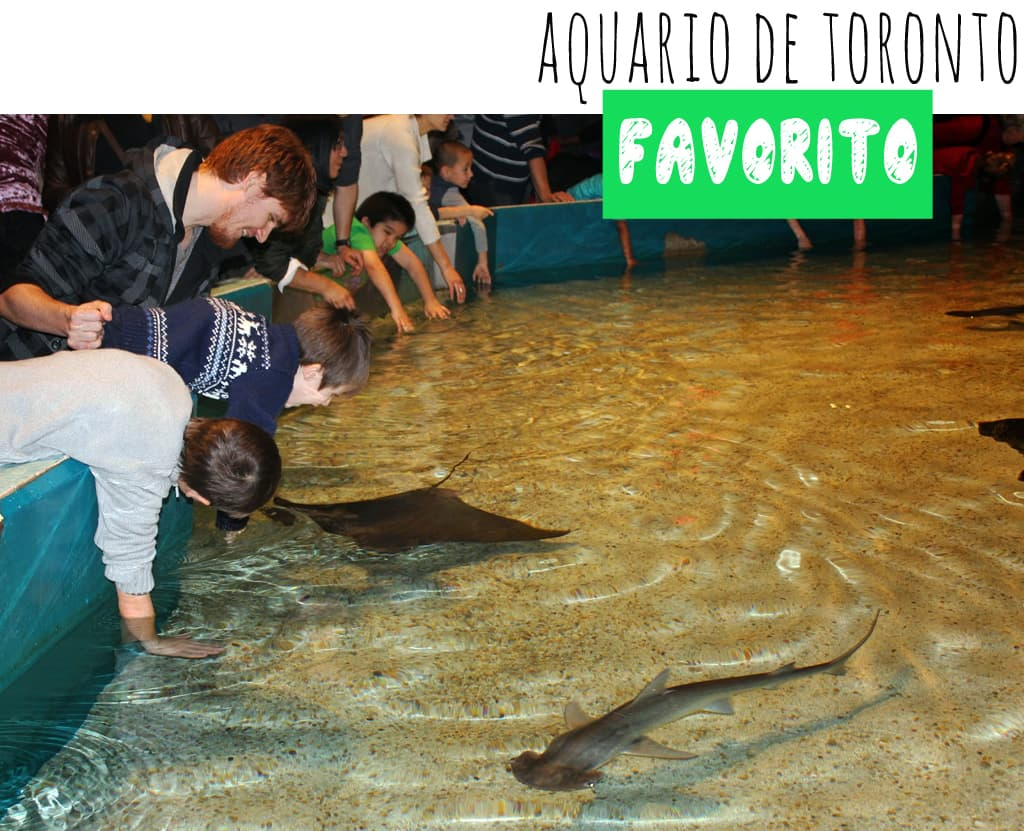 aquario_favorito