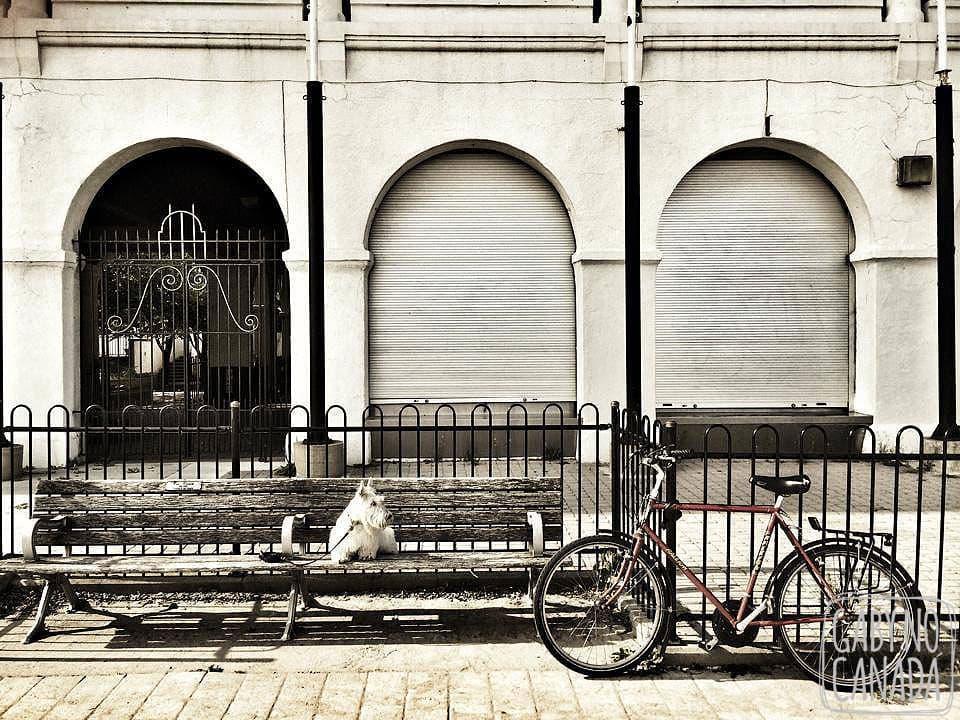 Jojoe_Bike_Lakeshore