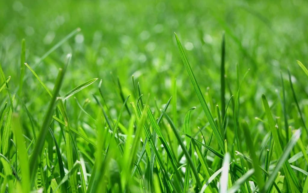 greengrass-background